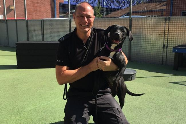 Stray puppy set to become police sniffer dog | Gazette Series