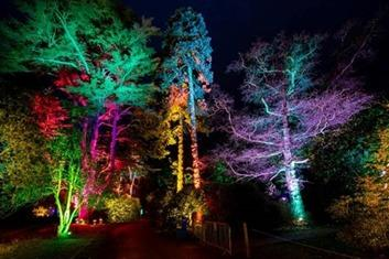 Westonbirt Christmas lights