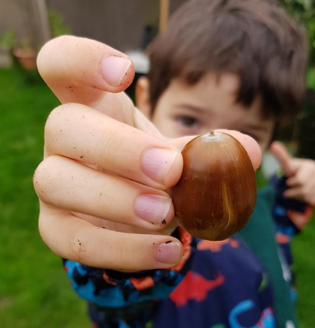 Felix, aged 6, who has been getting involved with 'Ourboretum'