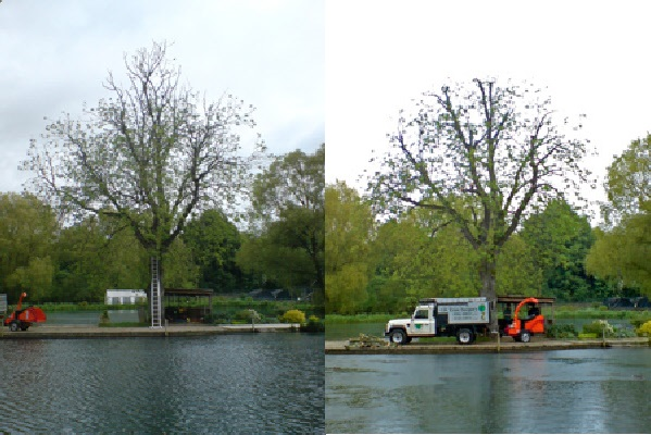 SAM KELLY TREE SURGERY LTD