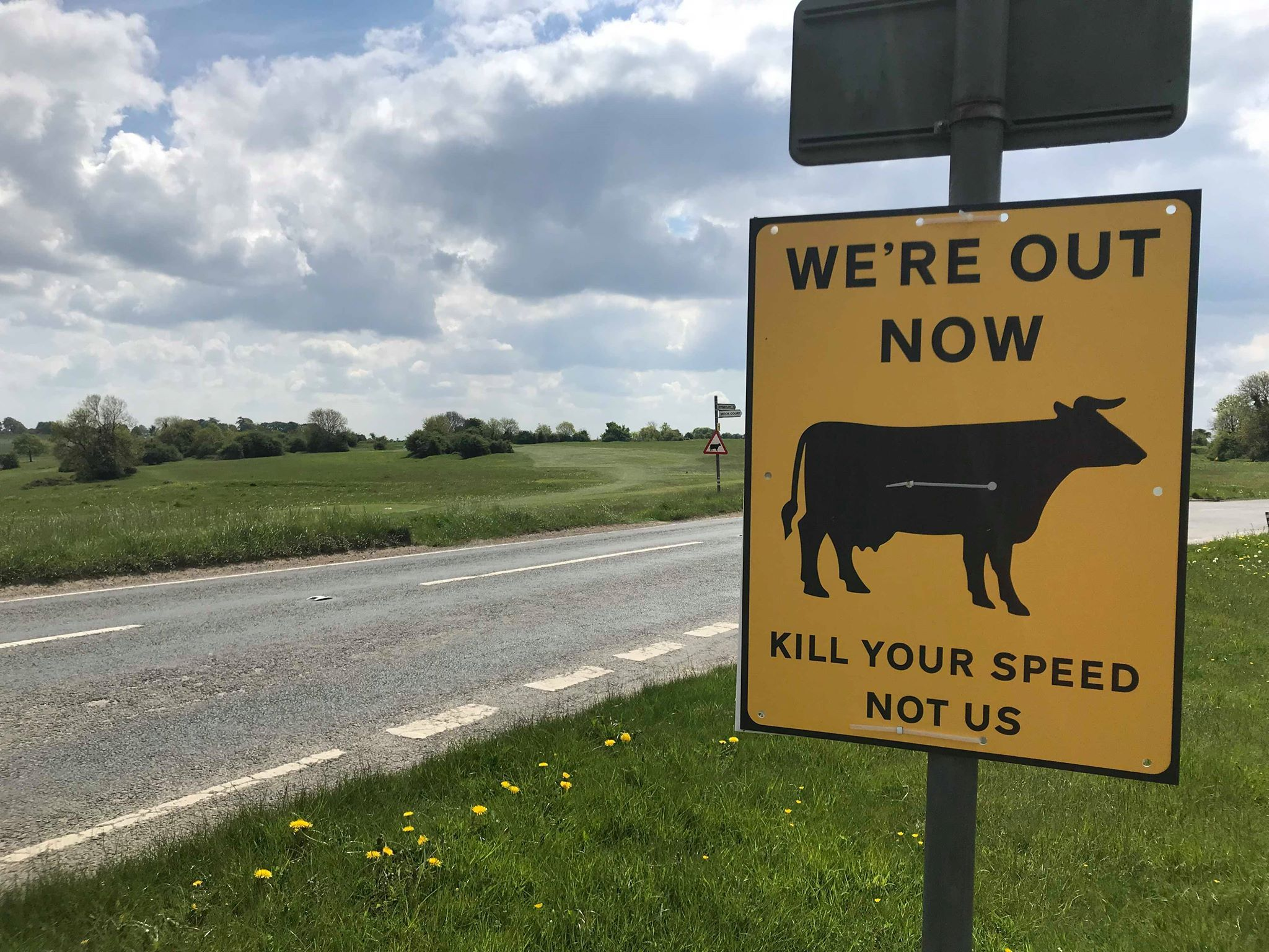Last Sunday saw the cows return to the commons near Stroud for their summer grazing, new signs have been placed around the common  to encourage drivers to slow down