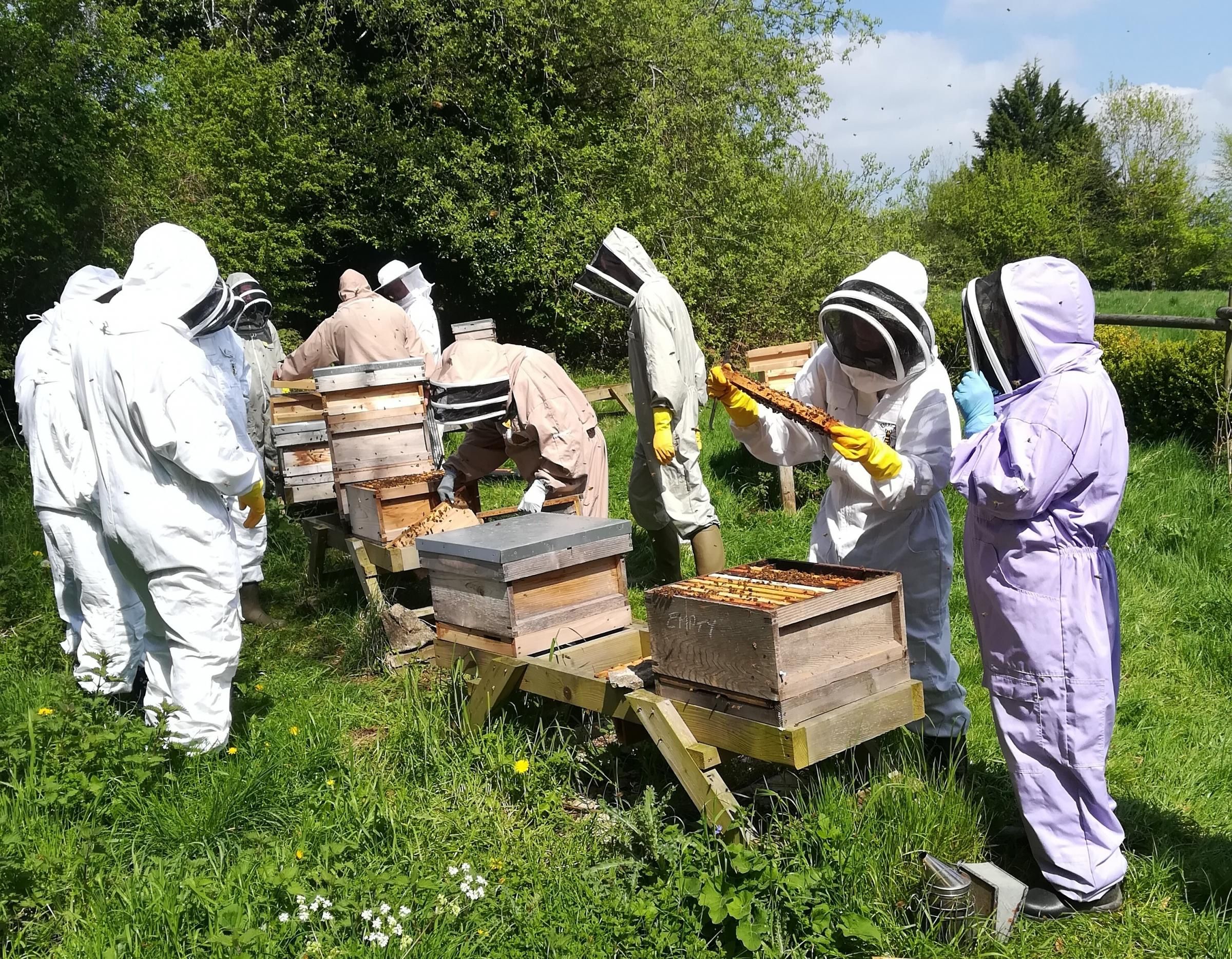 On Sunday 16th September the Stroud Beekeepers Association is running its annual Taster Day